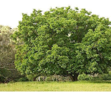 ağaç kişilik analizi