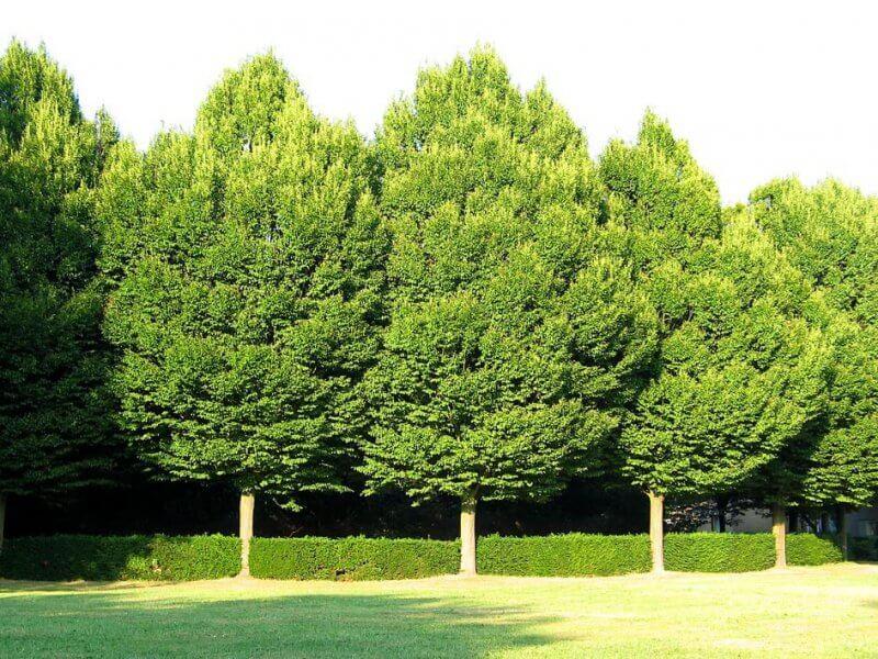 ağaç testi psikoloji