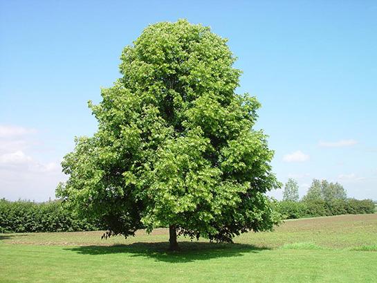 ağaç kişilik testi