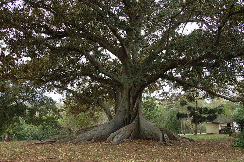 ağaç testi nedir